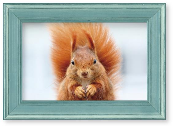 Bilderrahmen-Postkarte Eichhörnchen