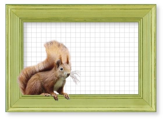 Bilderrahmen-Postkarte Eichhörnchen mit Karopapier
